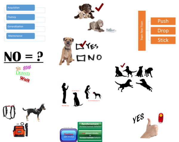 The Top Ten Most Important Dog Training Knowledge Concepts for Pet Owners to Understand